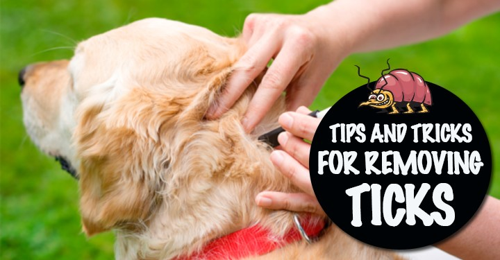 tips and tricks for removing ticks